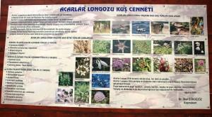 Acarlar_Longozu,_Longoz_Acarlar